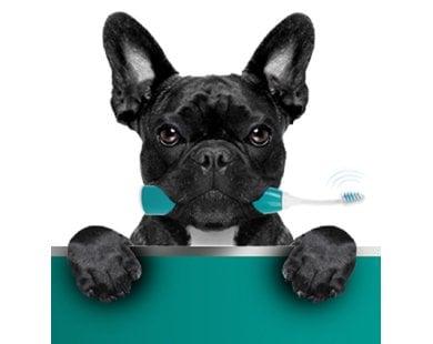 Igiene orale del cane 1
