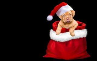 Cuccioli sotto l'albero