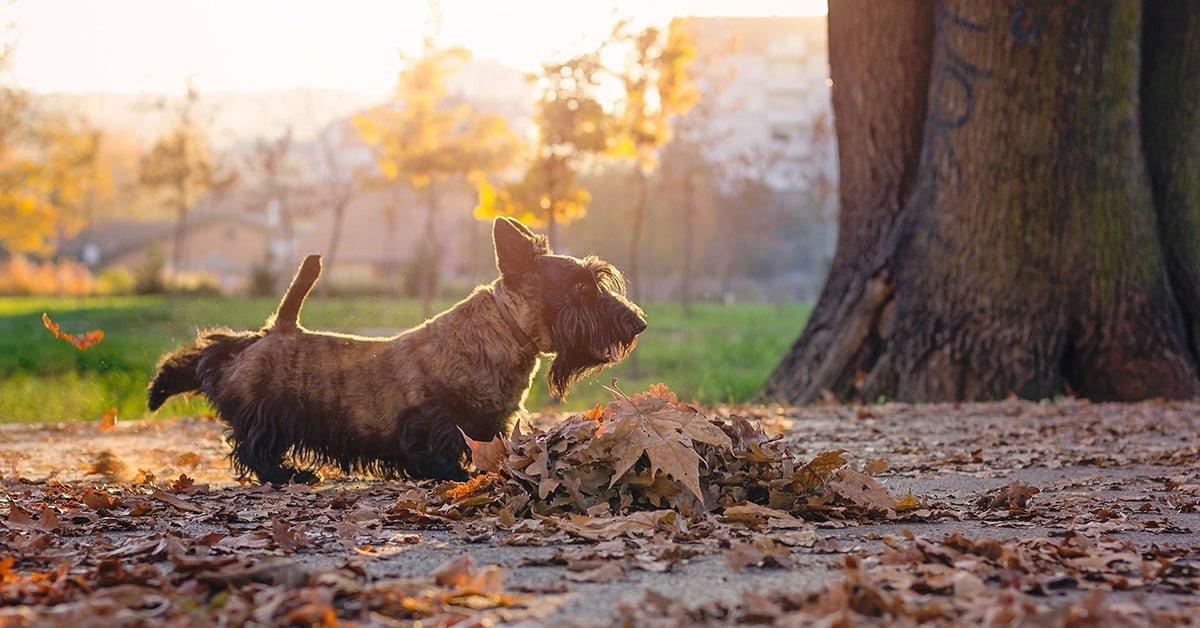 Perché il cane raspa il terreno