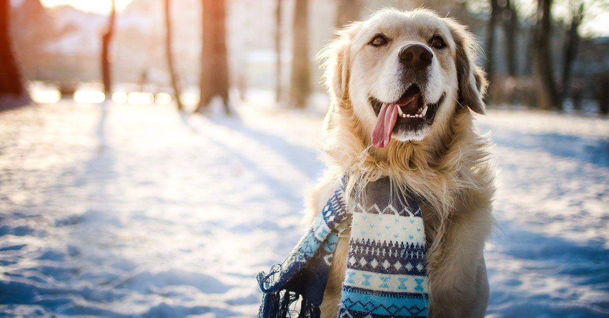 cappottino al cane si o no