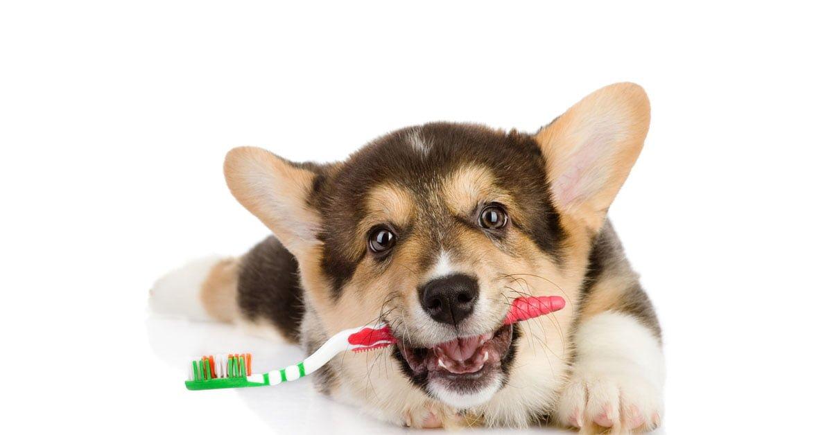 igiene orale nel cane