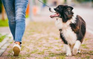 educazione di base del cane