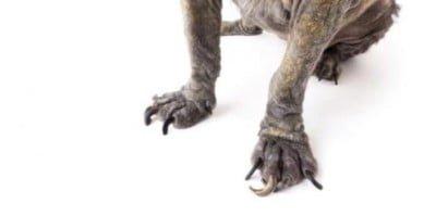 Maltrattamento cani, le nuove frontiere 2