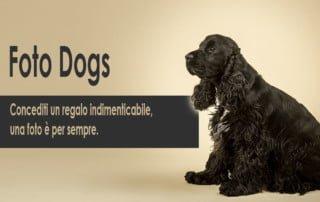foto dogs