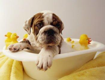 lavare il cane con acqua e aceto