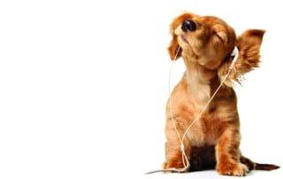 perché il cane non ci ascolta