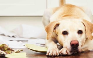 Problemi comportamentali del cane