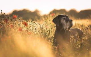 Cane e forasacchi un pericolo insidioso