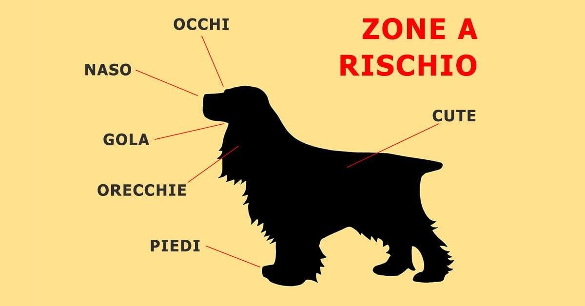 forasacchi_zone a rischio