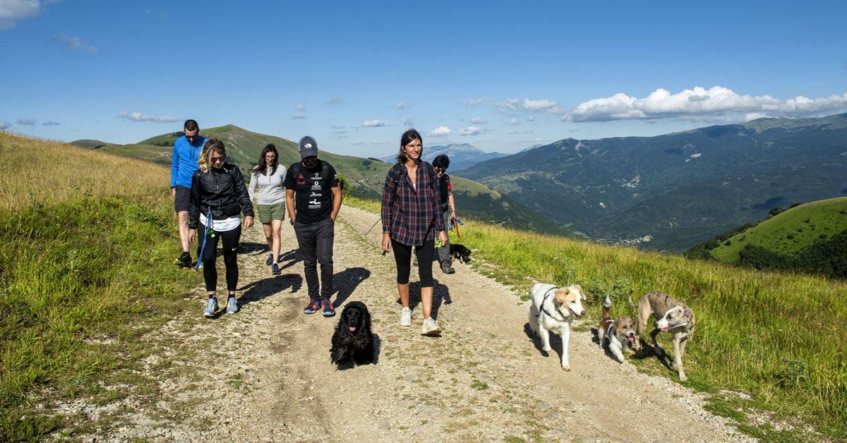 Dog Trekking 2