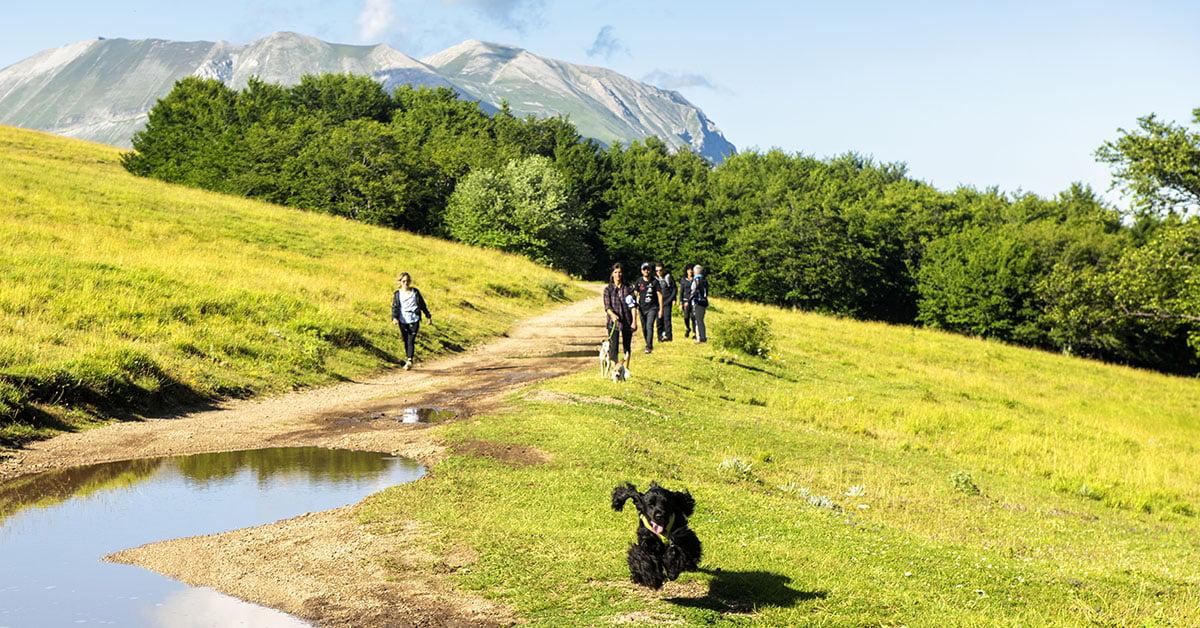 Dog Trekking 3