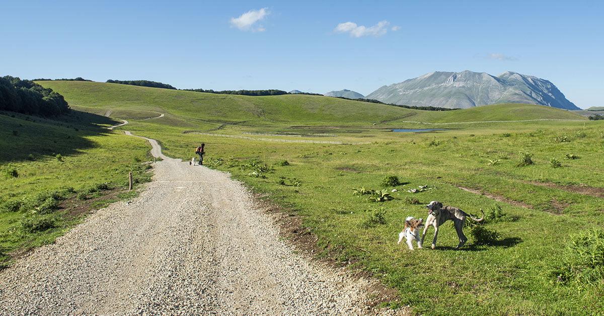 Dog Trekking 4