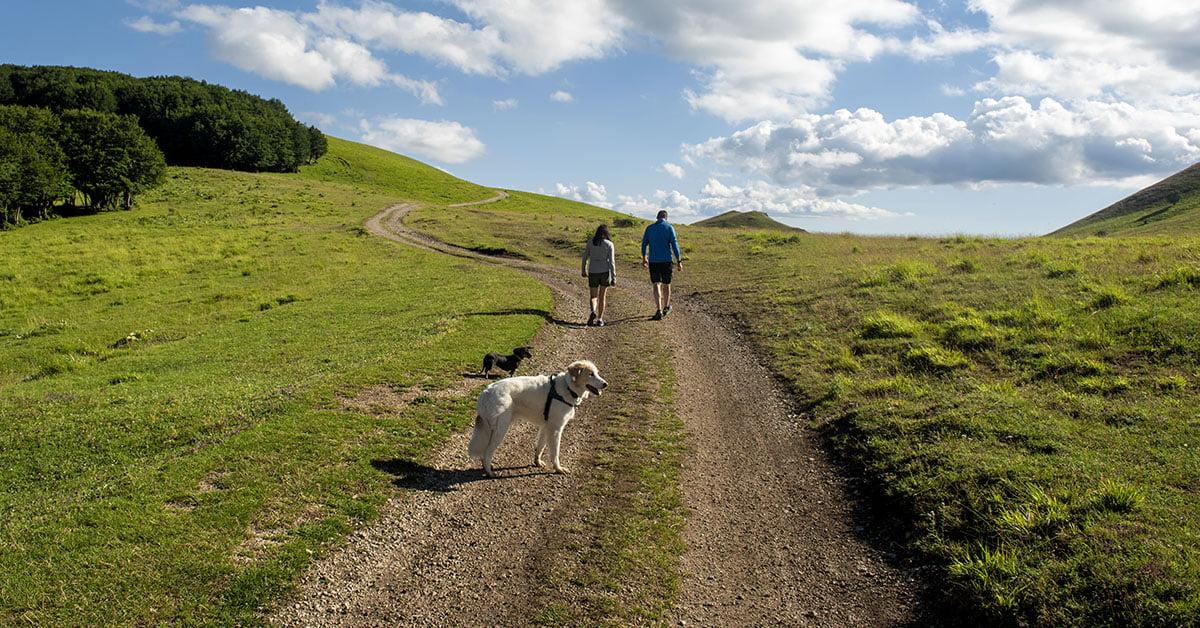 Dog Trekking 8
