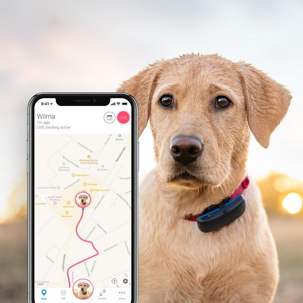 GPS per cani Tractive 3