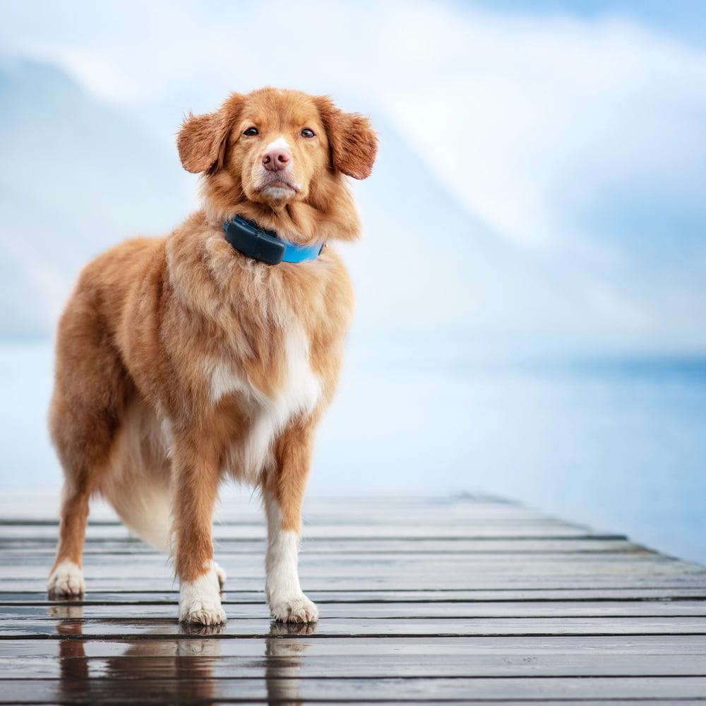 GPS per cani Tractive 5