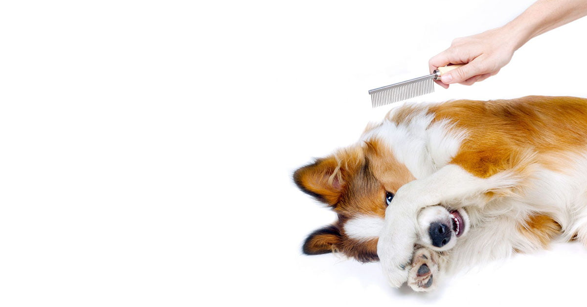 toelettare cani difficili